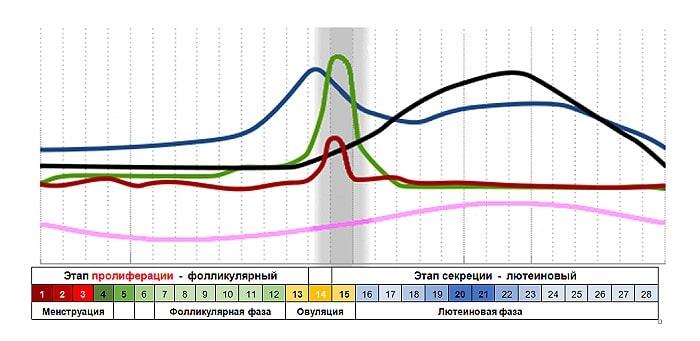 График женских гормонов